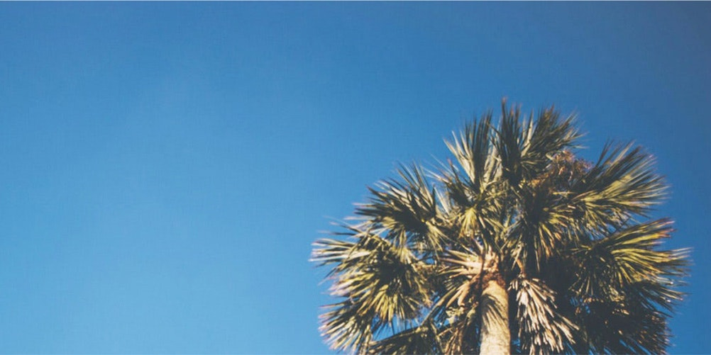 palm tree against a blue sky background image